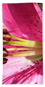 Dwarf Oriental Lily Named Farolito Beach Towel