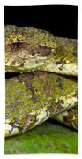 Eyelash Viper Beach Towel