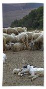 Flock Of Sheep Beach Towel