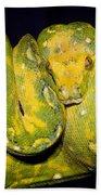 Green Tree Python Beach Towel