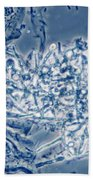 4 Phase Contrast- Candida Albicans Beach Towel