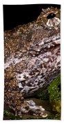 Rusty Robber Frog Beach Towel