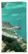 Saltwater Crocodile Crocodylus Porosus Beach Towel by Mike Parry