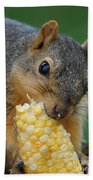 Squirrel Eating Sweet Corn Beach Towel