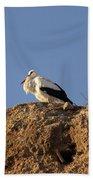 Storks In Marrakech Beach Towel
