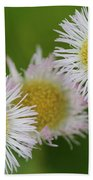 Wildflower Named Robin's Plantain Beach Towel