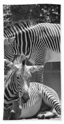 Zebras In Black And White Beach Towel