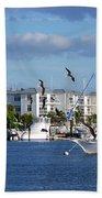 5- Black Skimmers Beach Towel