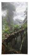 Bromeliad Bromeliaceae And Tree Fern Beach Towel