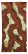 Fluorescent Coral In White Light Beach Towel