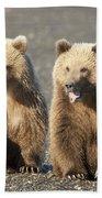 Grizzly Bear Ursus Arctos Horribilis Beach Sheet