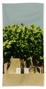 Photoperiodicity In Soybean Plants Beach Towel by Science Source