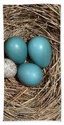 Robins Nest And Cowbird Egg Beach Towel