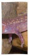 West Virginia Spring Salamander Beach Towel