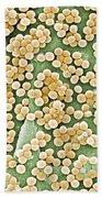 Methicillin-resistant Staphylococcus Beach Towel