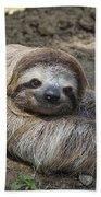 Brown-throated Three-toed Sloth Beach Towel