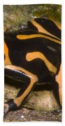 Crowned Poison Frog Beach Towel