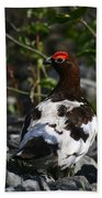 Willow Ptarmigan Beach Towel