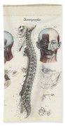 Anatomie Methodique Illustrations Beach Towel