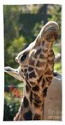 Baringo Giraffe Beach Towel