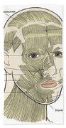 Illustration Of Facial Muscles Beach Towel