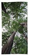 Redwoods Sequoia Sempervirens Beach Towel
