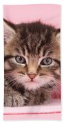 Tabby Kitten Beach Towel