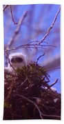 A Baby Red Tail Gazing From Its Nest Beach Towel