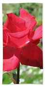A Beautiful Red Flower Growing At Home Beach Towel