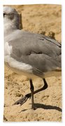 A Bird Of Many Colors Beach Towel