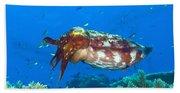 A Broadclub Cuttlefish, Kimbe Bay Beach Towel