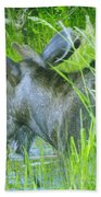 A Bull Moose Wading His Pond Beach Towel