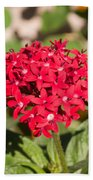A Bunch Of Small Red Flowers Beach Towel