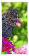 A Butterfly On The Pink Flower Beach Towel