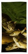 A Cat With Trout Perch And Carp On A Ledge Beach Towel by Stephen Elmer