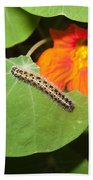 A Caterpillar Eating The Leaves Of A Plant With A Beautiful Orange Flower Beach Towel
