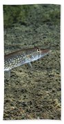 A Chain Pickerel Wimming The River Beach Towel by Terry Moore