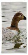 A Female Canvasback Duck  Beach Towel