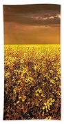 A Field Of Canola With A Rainbow Beach Towel