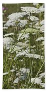 A Field Of Queen Annes Lace Beach Towel