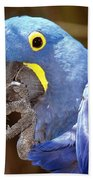 A Foot In Its Mouth Beach Towel