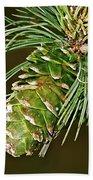 A Growing Pine Cone Beach Towel