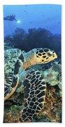 A Hawksbill Turtle Swims Beach Towel