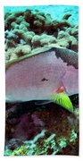 A Hogfish Swimming Above A Coral Reef Beach Towel