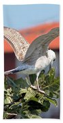 A Juvenile Herring Gull Beach Towel