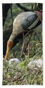 A Painted Stork Feeding Its Young At The Delhi Zoo Beach Towel
