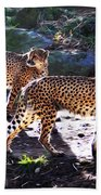 A Pair Of Cheetah's Beach Towel