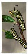A Pair Of Monarch Caterpillars Beach Sheet