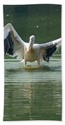 A Pelican Drying Its Wings After Landing In The Lake Inside Delhi Zoo Beach Towel