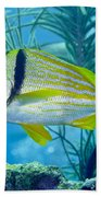 A Porkfish Swims By Sea Plumes Beach Towel by Terry Moore